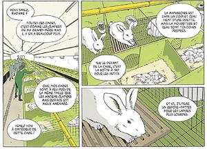 Clapier-lapins-interieur
