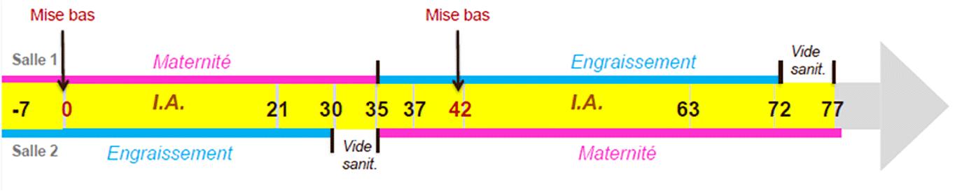 Chronologie-mouvement-des-lapins
